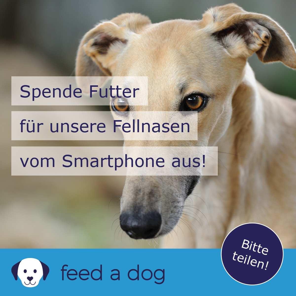 Futter spenden mit der Futterspenden-App feed a dog